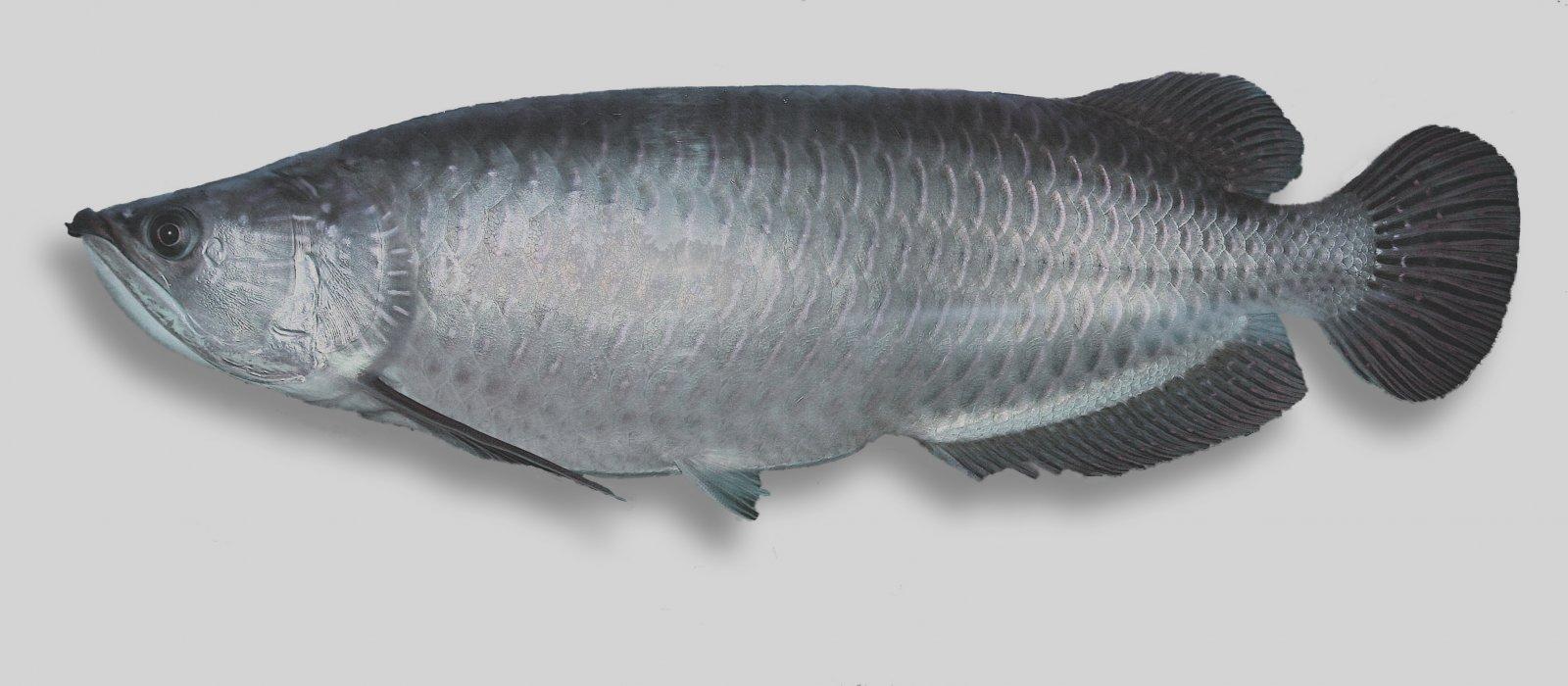 Fish Identification | Suntag